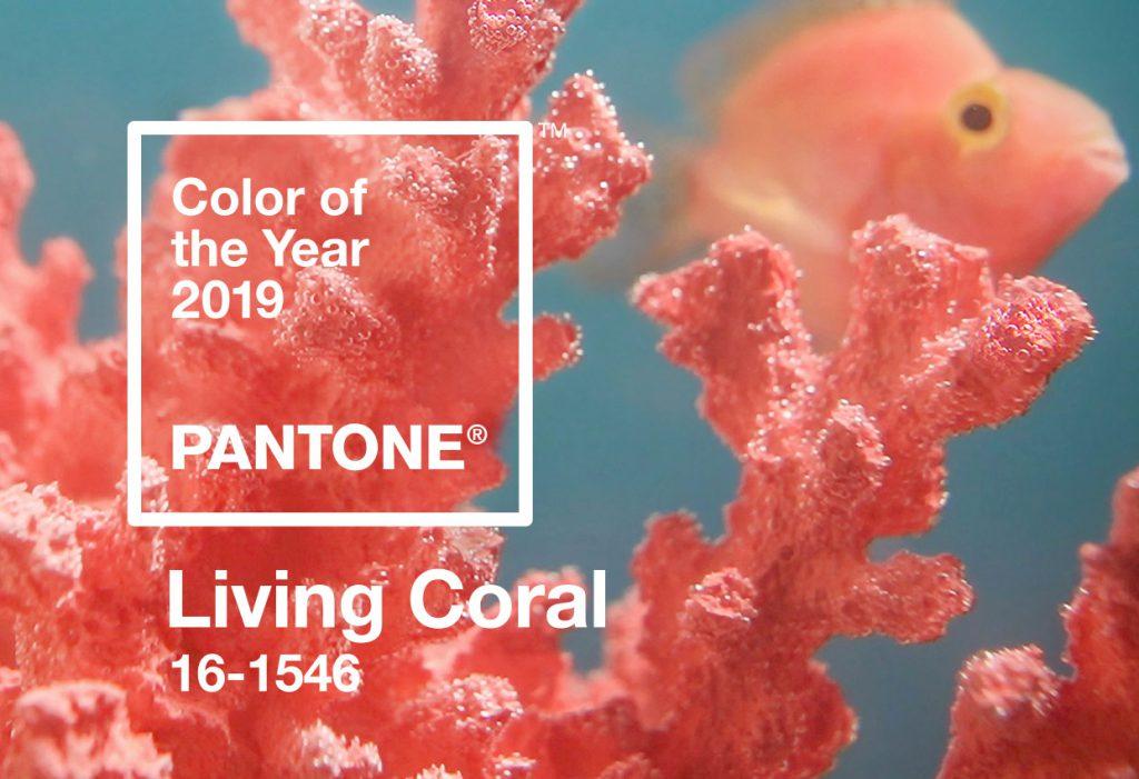 Pretty Coral Reef
